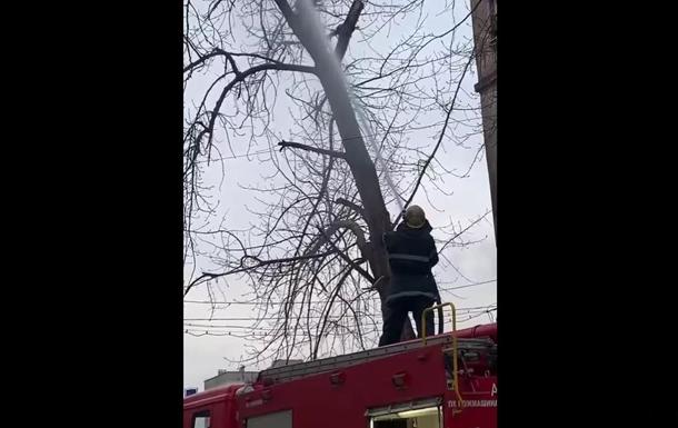 Рятувальники Кривого Рогу збили водою кішку з дерева