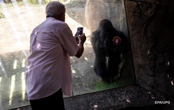 В одному із зоопарків США від коронавірусу щепили горил