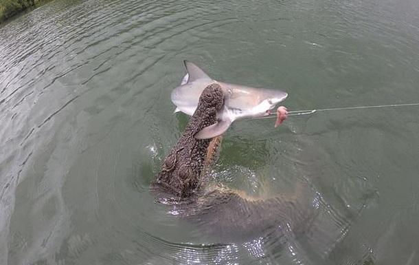 Огромный крокодил отобрал у рыбаков акулу