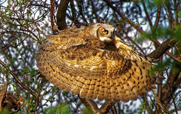Відібрано кращі фото дикої природи Nature Awards