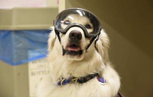 У США собака працює в хімічній лабораторії