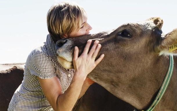 Коров ячі обійми. Нова послуга в коронавірус
