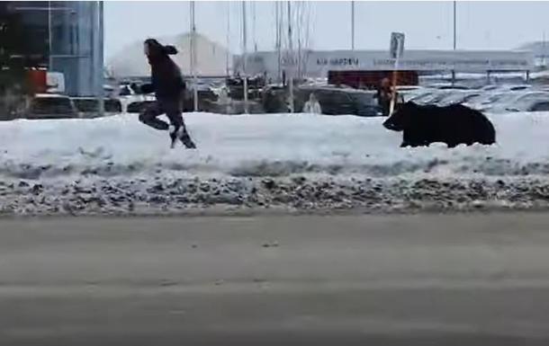 Медведь в городе гонялся за прохожим