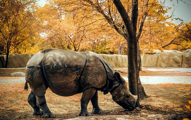 Світовий банк вводить облігації тварин