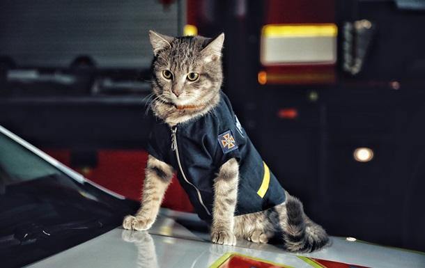 Киевский кот-спасатель получил звание майора