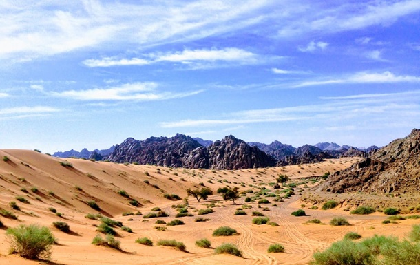 У Саудівській Аравії висадять 10 млрд дерев