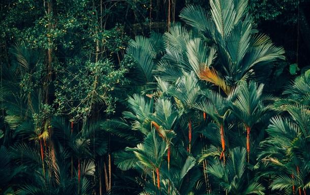 Тропічні ліси будуть відновлювати, використовуючи каву
