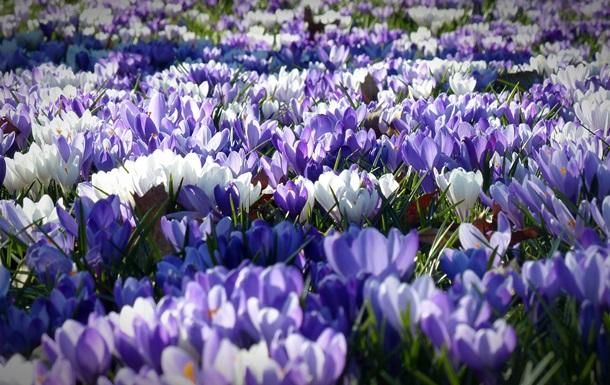 Свята 31 березня в Україні і світі: факти, традиції, прикмети