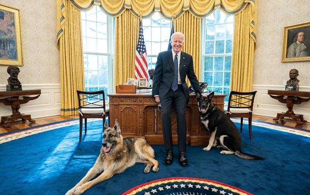 Загроза в Білому домі. Проблеми Байдена з собаками