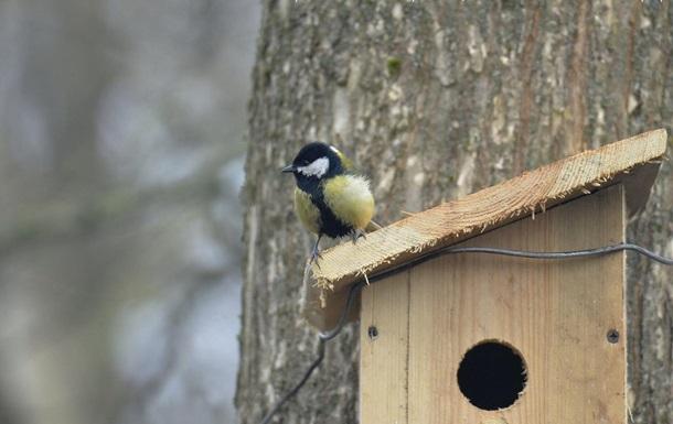 У Чорнобилі для птахів встановили нові будинки