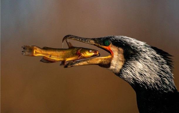 Представлені фото-фіналісти Bird Photographer Year