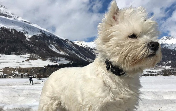 Собака-мандрівник викликав заздрість у своїх підписників