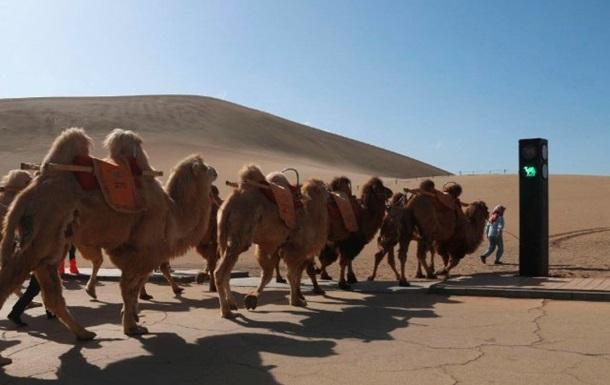 У Китаї з явився світлофор для верблюдів