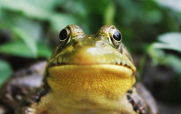В Естонії перекрили трасу через жаб