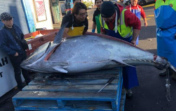 Австралийские рыбаки поймали тунца весом около 300 кг