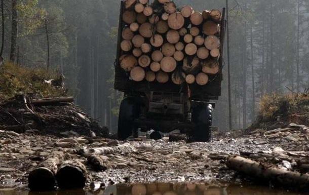 З явилося відео масової вирубки лісів на Волині
