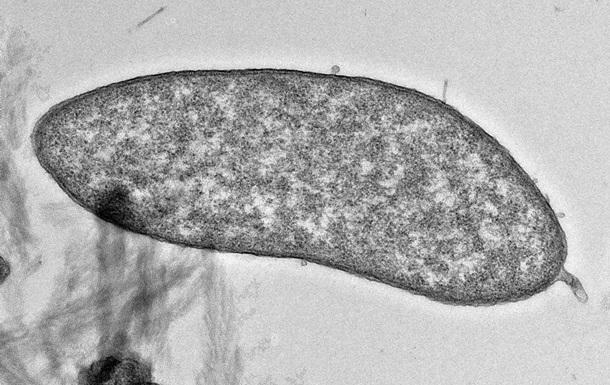Знайдено мікроби, які здатні виробляти чисту мідь