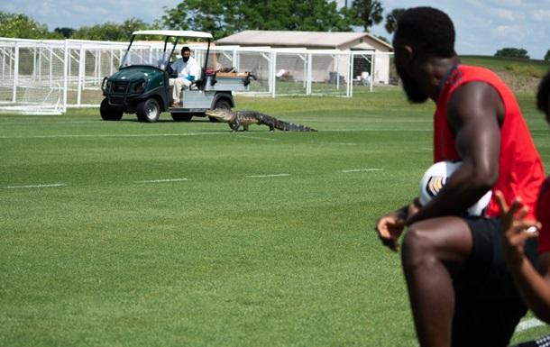 У Флориді крокодил завадив тренуванню футболістів