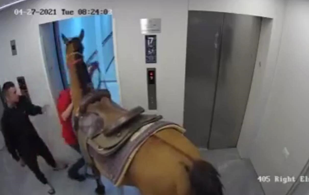 В Ізраїлі опублікували відео з конем у ліфті