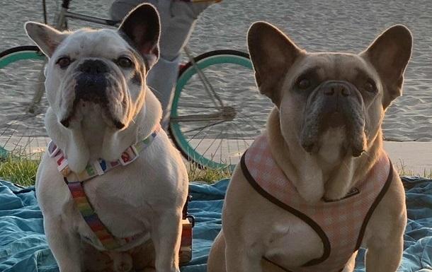 Викрадачів собак Леді Гаги заарештували - ЗМІ