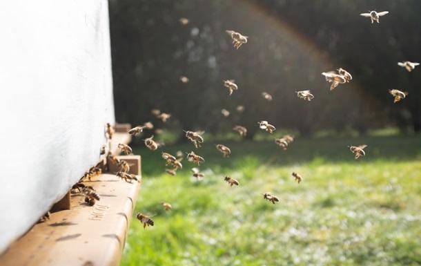 У Нідерландах провели четвертий національний перепис бджіл