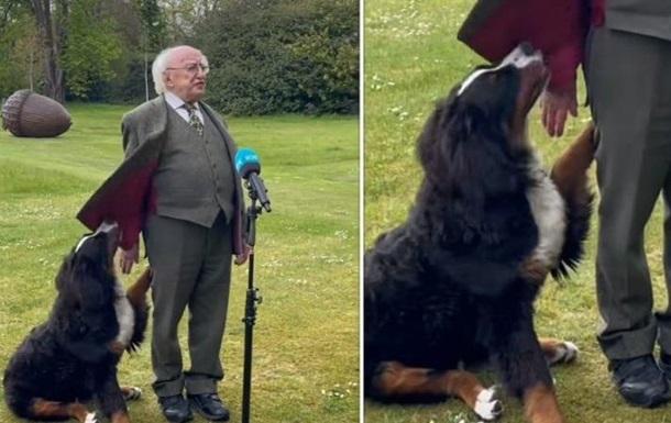 Щенок вмешался в выступление президента Ирландии