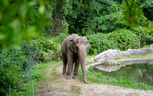 Слониха подала в суд на зоопарк из-за неволи