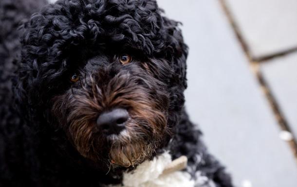 Скончалась собака Обамы по кличке Бо