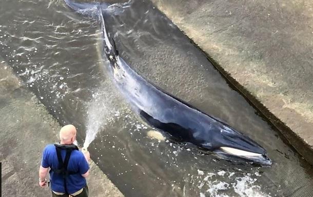 В Лондоне кит застрял на реке Темза