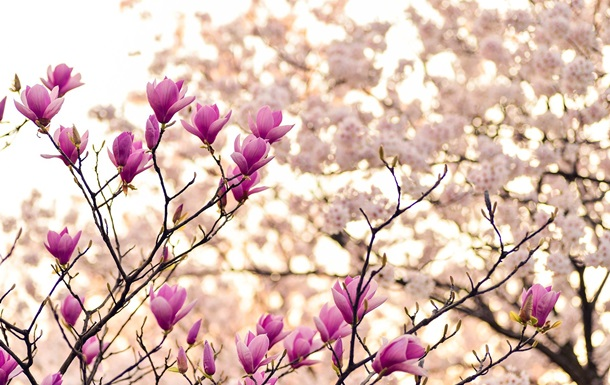 Праздники 14 мая: факты, традиции, приметы