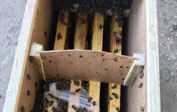 Укрпошта не може позбутися від бджіл, що ожили