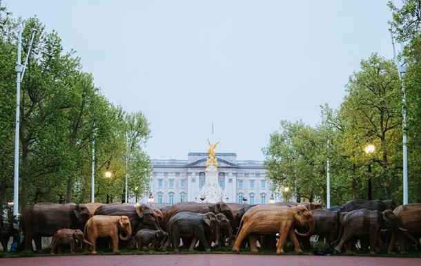 К Букингемскому дворцу  пригнали  стадо деревянных слонов