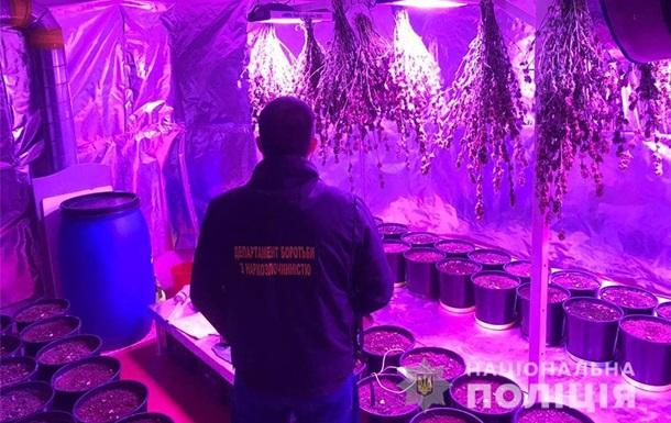 Житель Київщини вирощував у підвалі будинку коноплю