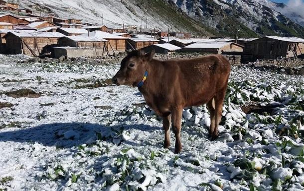 На побережье Черного моря в Турции выпал снег