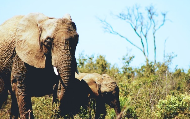 Стадо слонов сбежало из заповедника в Китае