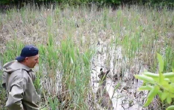Возле Ровно из болотной ловушки спасли лосиху