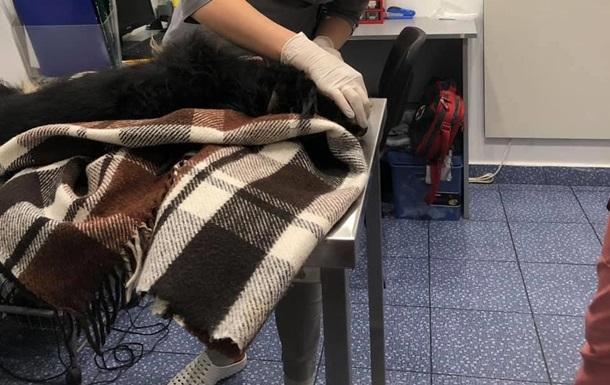У Києві чоловік викинув через вікно собаку
