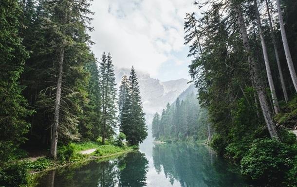 У Мінекології розповіли про перспективи `мільярда дерев Зеленського`
