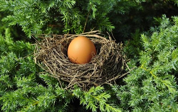В Ізраїлі виявили куряче яйце віком близько тисячі років