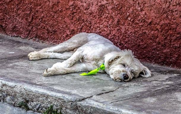 В Австралії жорстоким людям заборонили тримати тварин