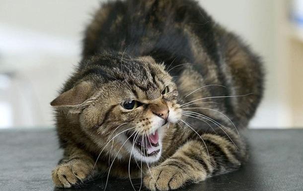 Через скаженого кота в Київській області закрили на карантин 11 сіл