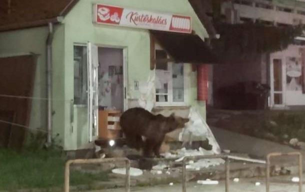 Румынский курортный город оккупировали медведи