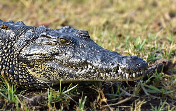 В Ялте затопило крокодиляриум