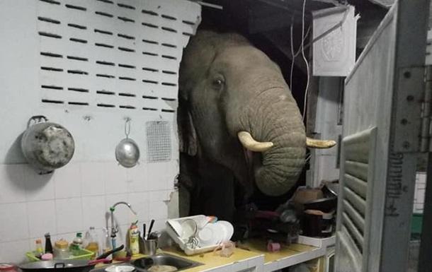 Слон проломив стіну кухні заради мішечка рису