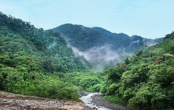 Африканська країна отримала мільйони доларів за захист тропічних лісів