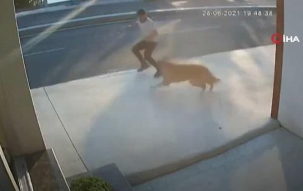 В Стамбуле мужчина попал под грузовик из-за собаки