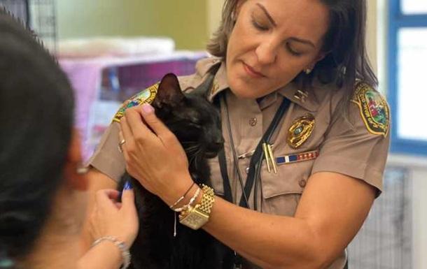 Під завалами будинку в Маямі знайшли живого кота