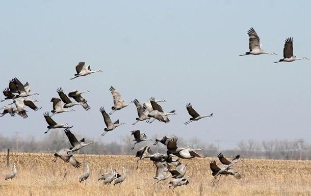 В Херсонской области нашли причину массовой гибели птиц