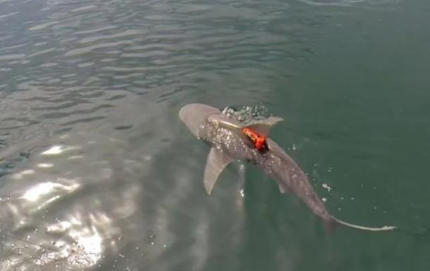 Ученые заявили, что акулы охотятся посменно во имя мира
