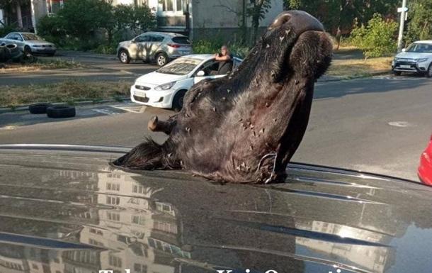 У Києві розбили авто і поклали голову корови